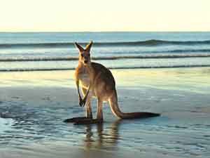 Экскурсии в Австралию