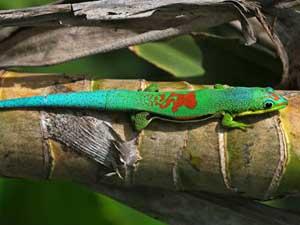 Туры в Мадагаскар