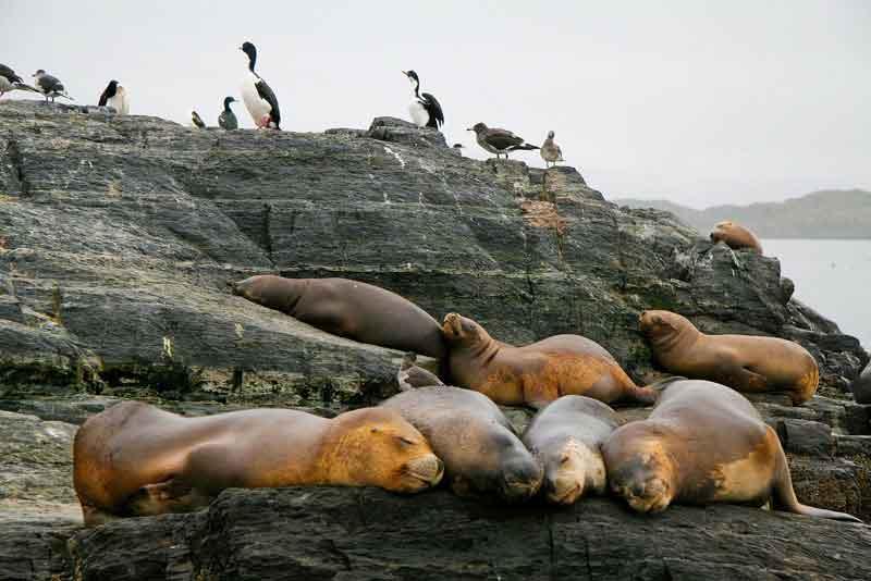 Морские львы и бакланы