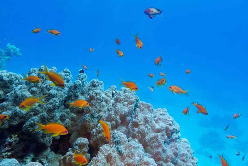 Красочный коралловый риф