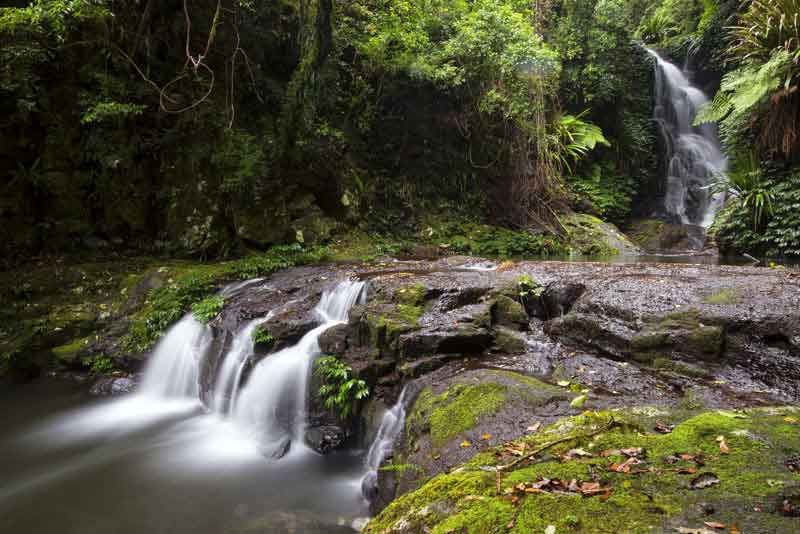 Всемирное наследие национальный парк Ламингтон