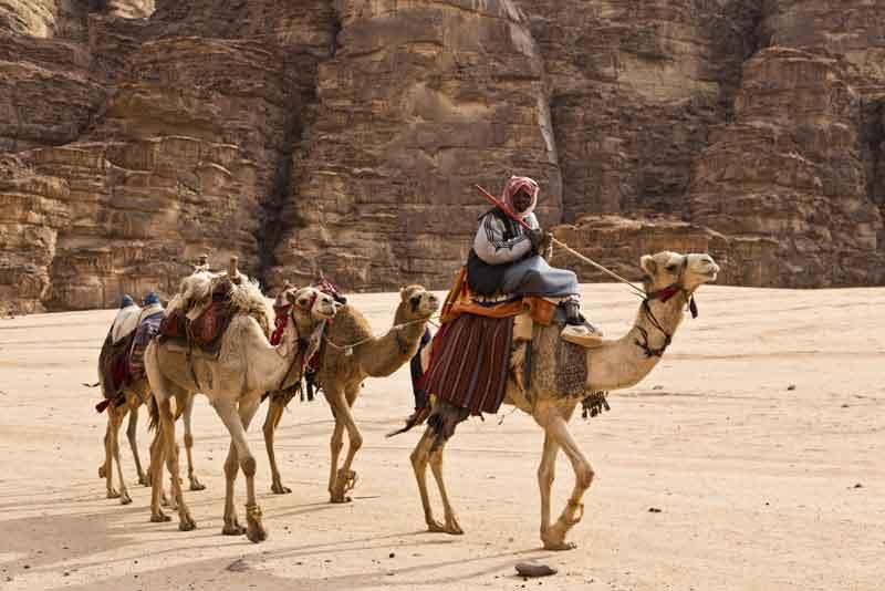 Караван верблюдов в пустыне Вади-Рам