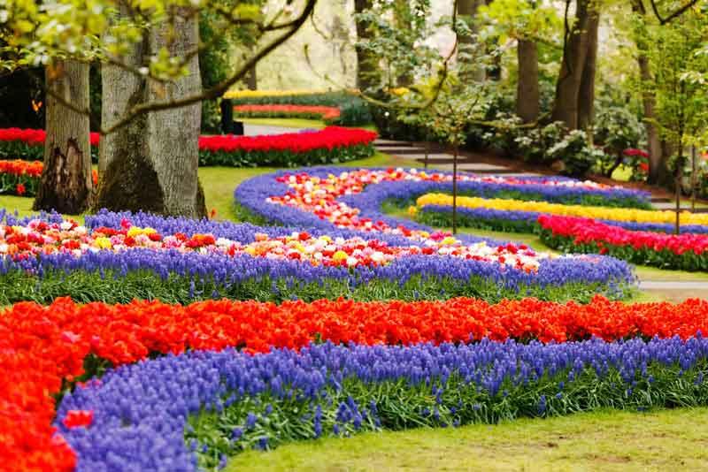 Цветочная волна в парке Койкенхоф