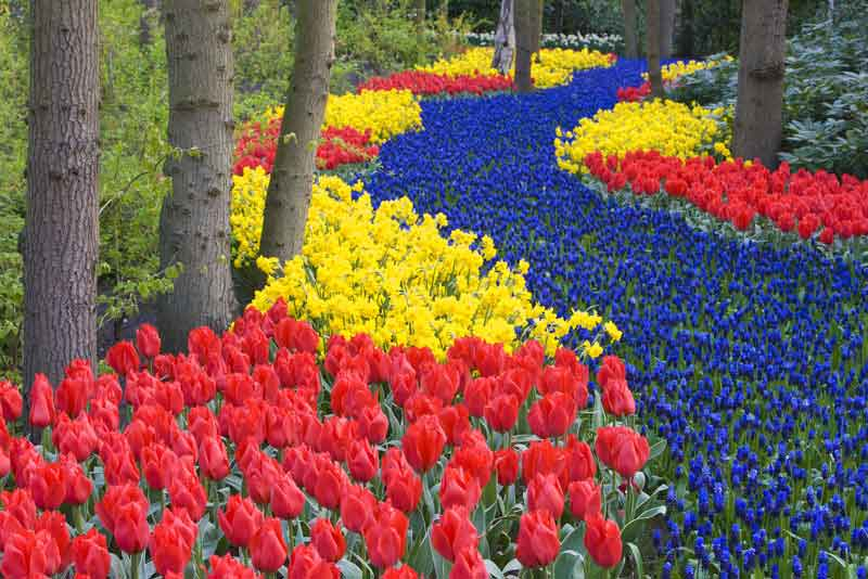 Парк цветов Койкенхоф